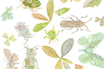 Melissa Shultz-Jones Illustration - melissa, shultz-jones, repeat pattern, surface pattern design, gift wrap, wrapping paper, watercolour, insects, moths, butterflies, leaves, clover, bug,